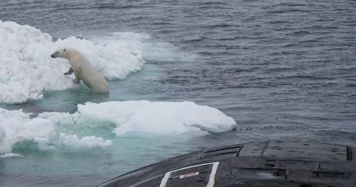 الدب القطبي الذي اخاف الغواصة النووية الروسية